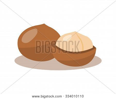 Macadamia Nuts Isolated On White Background. Macadamia Nuts