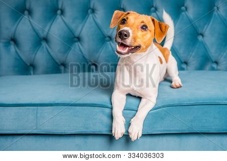 Soft Sofa. Furniture Background. Dog Lies On Turquoise Velour Sofa. Cozy And Comfortable Home Interi