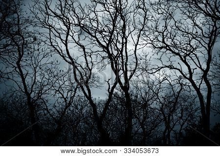 Leafless Tree Branches In A Scary Forest. Scary Tree.
