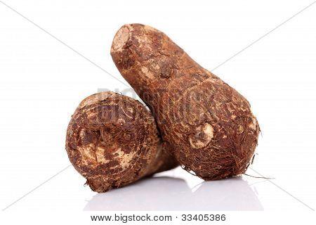 Fresh whole taro root