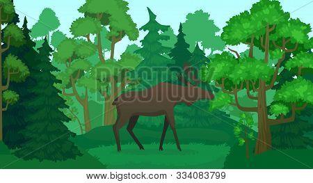 Cartoon Moose In Forest Landscape. Deer Silhouette In Woods, Green Forests Trees. Wildlife Elk Norwa