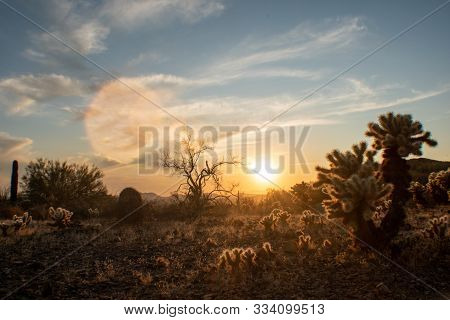 Late Evening In The Sonoran Desert With Cacti