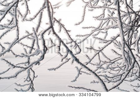 Beautiful Tree Branches With Hoarfrost And Snow. Misty Colorful Bright Morning. Amazing Winter Backg
