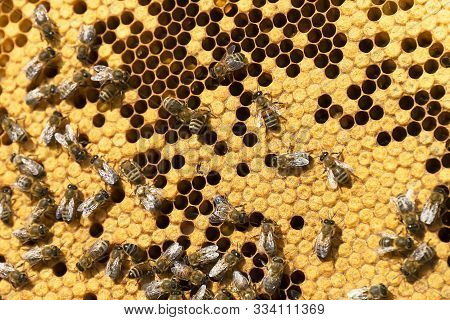 Working Bees On Honeycombs In Beehives In An Apiary. Honey-filled Frame With Honeycombs Closeup, Vie