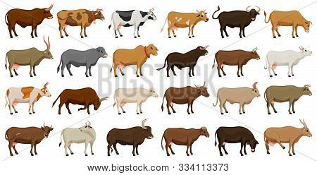Cow Of Animal Vector Cartoon Set Icon.isolated Cartoon Icon Farm Animal Of Cow.vector Illustration C