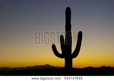 Saguaro At Sunset 9619