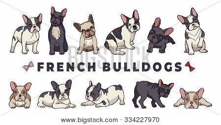 French Bulldogs. Vector Bulldog Set. Funny Cartoon Puppy Isolated On White Background. Puppy Bulldog