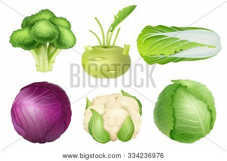 Cabbage Set. Green Nutrition Agricultural Objects Vegetarian Food Natural Healthy Fresh Products Vec