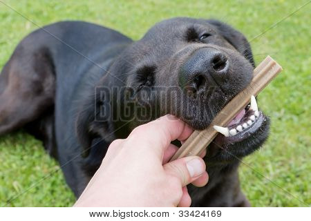 Feeding Of A Dog