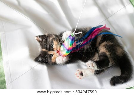 The Cat Plays With The Toy . Little Cat. Kitten. Toy For Animals.