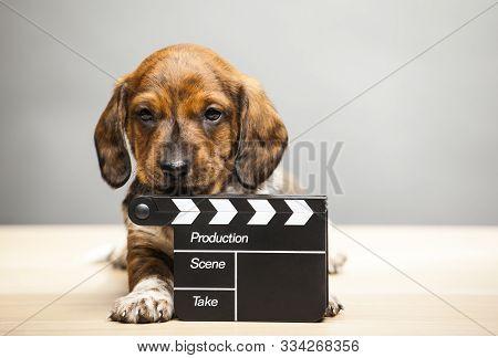 Puppy Portrait Clapper Board Table Studio Light