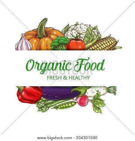 Vegetables, Healthy Food, Vector Sketch Vegetarian Salad Veggies. Vegan Natural Vegetables Pumpkin,