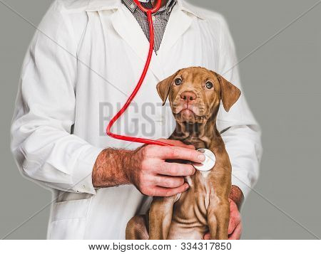 Young, Charming Puppy And Vet Doctor. Close-up