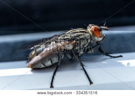 Small Insects In Macro Photography. Fly.small Insects In Macro Photography. Fly