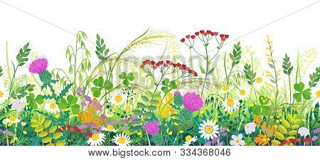 Seamless Line Horizontal Border Made With Summer Meadow Plants. Green Grass And Wild Flowers In Row