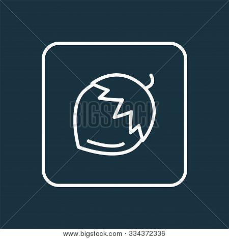 Hazel Nut Icon Line Symbol. Premium Quality Isolated Macadamia Element In Trendy Style.