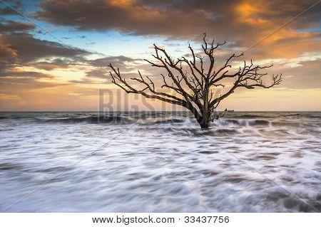 Botany Bay Edisto Island Sc Boneyard Beach Sunset Landscape Charleston