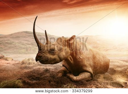 Wild Rhino (Rhinoceros) with huge horn in Africa