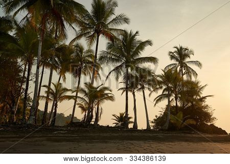 Palm trees sunset beach of the Pacific Ocean in Choco, Colombia, near Nuqui