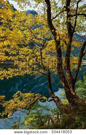 Sunny Idyllic Colorful Autumn Alpine View. Big Maple Tree Near Peaceful Mountain Lake With Clear Tra