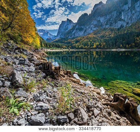 Tree Stumps Near Gosauseen Or Vorderer Gosausee Lake, Upper Austria. Colorful Autumn Alpine View Of