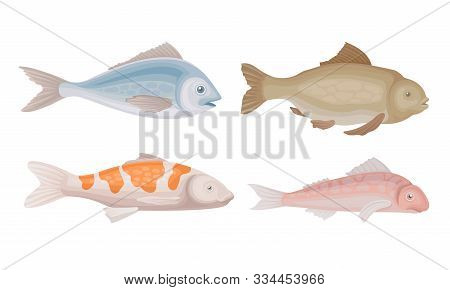 Realistic Marketable Fish Vector Set. Various Sorts Of Fresh Fish Collection