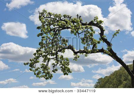 Klippa trädgren
