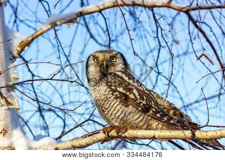 A Beautiful Owl Bird With Large Yellow Eyes And A Curved Beak Sits On A Tree Branch