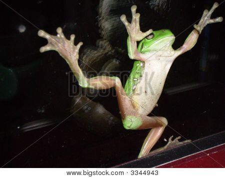 Green Tree Frog On Window.