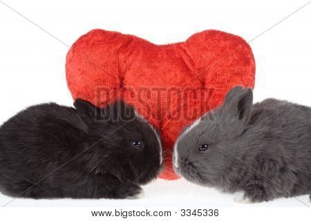 Two cute baby rabbits with red hearts isolated poster