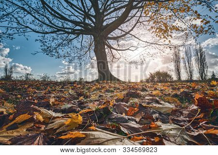 Close Up Of Autumn Leaves With Tree And Cloudscape In Background