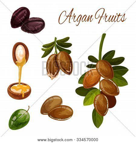 Argan Tree Nuts, Vector Botanical Illustration. Argan Oil Drop Splash From Seeds For Healthy Skincar