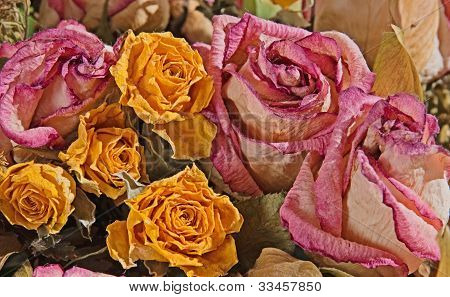 Faded Roses