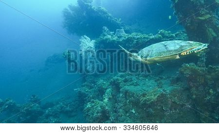 A Turtle At The Usat Liberty Wreck In Tulamben, Bali