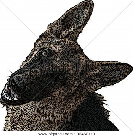 Brown German Shepherd Illustration