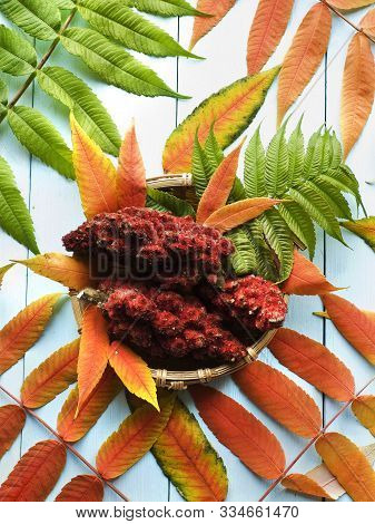 Drupes Of A Staghorn Sumac