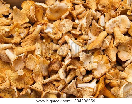 A Tray Full Of Chanterelle Mushrooms Chanterelle Mushrooms For The Preparation Of Meals At A Market