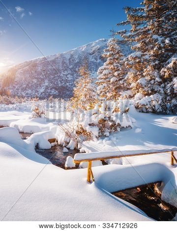Magical winter landscape with spruces covered in snow. Frosty day, exotic wintry scene. Location place Carpathian mountains, Ukraine, Europe. Winter nature wallpapers. Happy New Year! Beauty world.