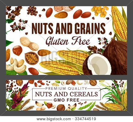 Nuts And Cereal Grains, Beans, Natural Gmo And Gluten Free Food Nutrition. Vector Wheat And Rye Or B