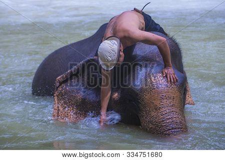 Luang Prabang , Laos - Aug 13 : Elephant Bathing In An Elephant Camp Near Luang Prabang Laos On Augu