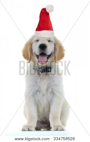 adorable little golden retriever puppy dog wearing santa claus hat for christmas is blinking and panting looking very happy and excited on white background