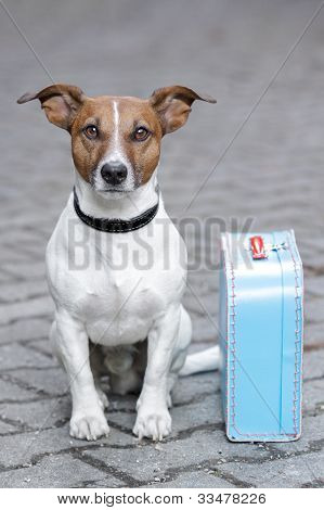 homeless dog with a bleu bag beside poster