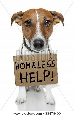 Homeless Dog holding a brown small cardboard poster