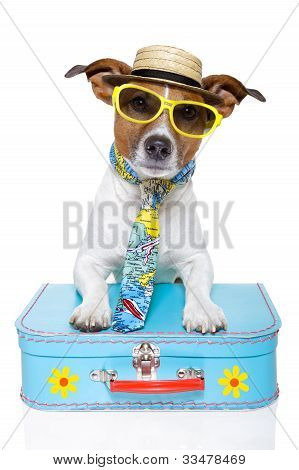 tourist dog with a hat , sunglasses and a bag
