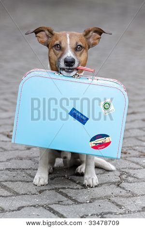 homeless dog holding a blue big bag poster