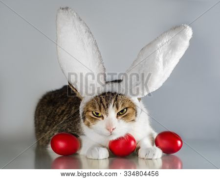 Angry Easter Cat In Rabbit Ears Guards Three Red Eggs