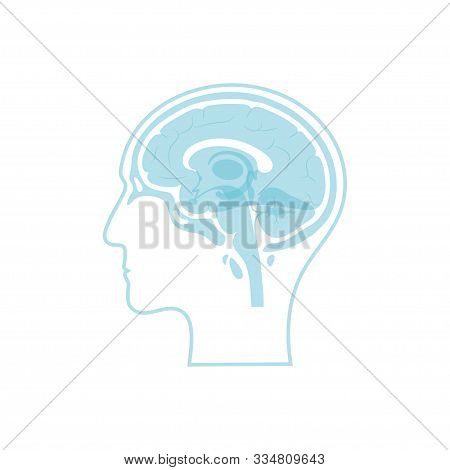 Vector Isolated Illustration Of Corpus Callosum, Part Of Nervous System. Man Brain Anatomy. Medical