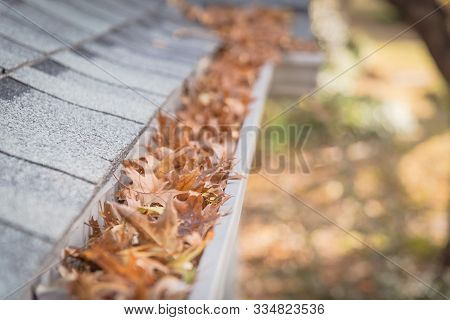 Shallow Dof Clogged Gutter Near Roof Shingles Of Residential House Full Of Dried Leaves
