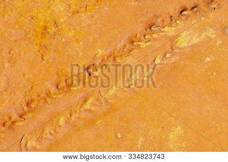 Fossilized Diplichnites Arthropod Trackways - Western Australia