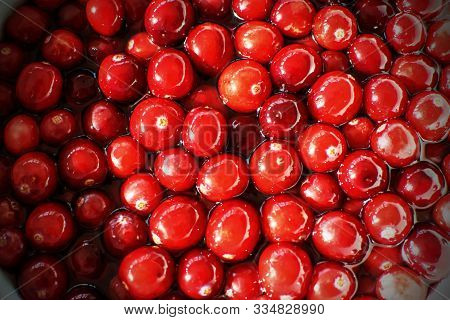 Closeup Cranberries In Sunshine, Healthy Ant-oxidant Rich Super-food Cranberry In Water For Thanksgi